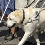 Picture of white canes and a guide dog